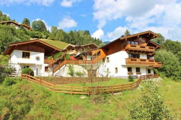 Alpensteinbock Saalbach afbeelding 1